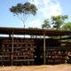 Panama : du bois dans tous ses états