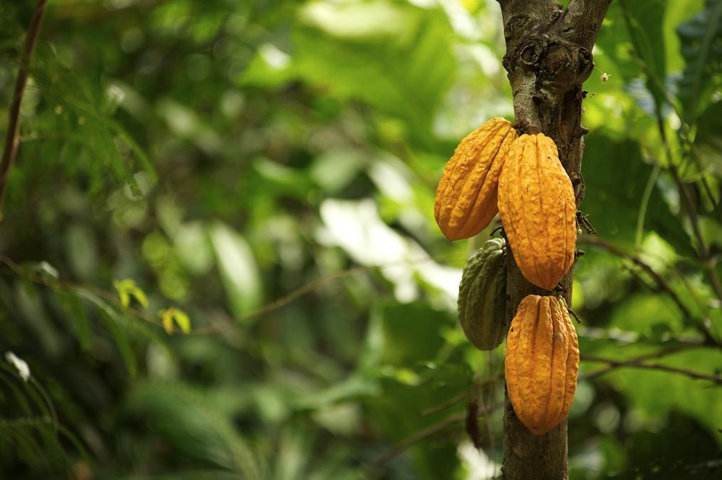 Comment traduire l'économie circulaire en cacaoculture ? | ForestFinance